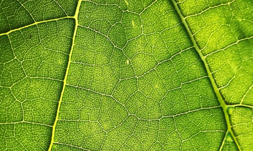 Фитоэкспертиза семян, посадочного материала, вегетирующих растений и энтомологические исследования