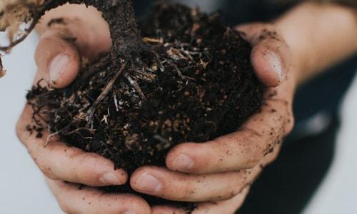 Фитоэкспертиза почвы